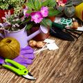 Gardening hobby tools for planting flowers on wooden floor - PhotoDune Item for Sale