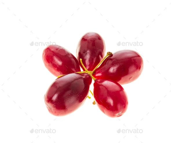 Ripe red dogwood berries. - Stock Photo - Images