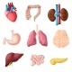 Cartoon Human Internal Organs Set