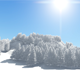 White Winter Forest Background - VideoHive Item for Sale