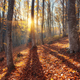 Beautiful autumn forest in crimean mountains at sunset. Nature - PhotoDune Item for Sale