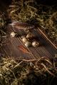 Fresh quail egg