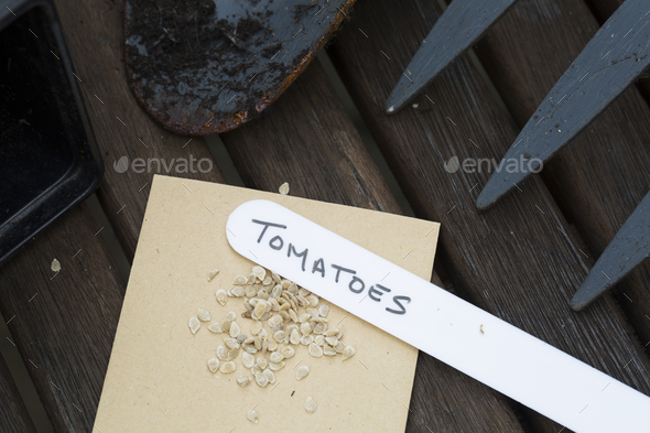 Tomato Seeds - Stock Photo - Images