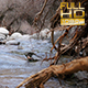 River Flow and the Old Root - VideoHive Item for Sale