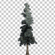 White Fir Snow Tree - VideoHive Item for Sale