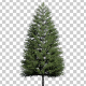 Norway Spruce Tree - VideoHive Item for Sale