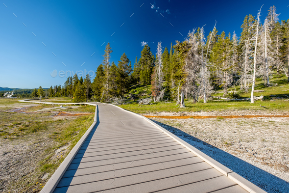 Boardwalk in Yellowstone National Park - Stock Photo - Images