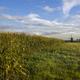 Cornfield near Uppel on a crispy clear morning - PhotoDune Item for Sale