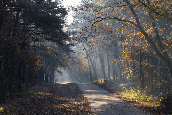 Autumn mood in the national park The Loonse en Drunense Duinen in the Dutch province Noord-Brabant - Stock Photo - Images