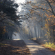 Autumn mood in the national park The Loonse en Drunense Duinen in the Dutch province Noord-Brabant - PhotoDune Item for Sale