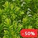 Green Thumb | Gardening & Landscaping Theme