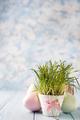 flowerpot with a grass