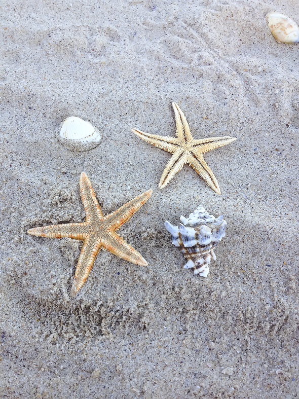 starfish in the beach sand - Stock Photo - Images