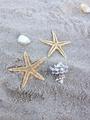 starfish in the beach sand