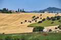 Rural landscape near Recanati (Italy)
