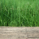 Wooden platform with rise field plantation in Thailand - PhotoDune Item for Sale