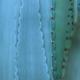 Thorn of cactus leaf texture - PhotoDune Item for Sale