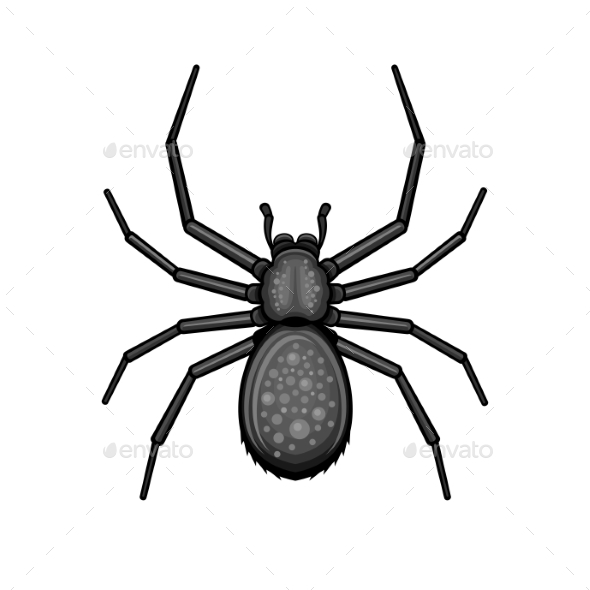 Spider Black Arachnid on White Background - Animals Characters