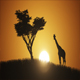 Sunset In Africa - VideoHive Item for Sale