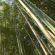 Bamboo Forest At The Evening - VideoHive Item for Sale