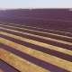 Solar Station on Agriculture, Solar Power Plants, Panels - VideoHive Item for Sale