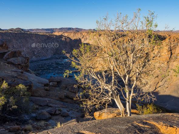 Orange River Gorge With Tree - Stock Photo - Images