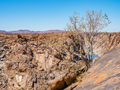 Orange River Gorge With Tree