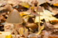 Mushroom growing on ground of a Beech forest - PhotoDune Item for Sale