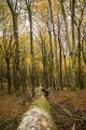 Fallen Beech tree in Autumn