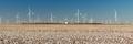 Wind Turbines Alternative Energy Texas Cotton Field Agriculture - PhotoDune Item for Sale