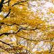 Autumn leaves on the branches - PhotoDune Item for Sale