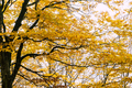 Autumn leaves on the branches