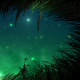 Grass At Night With Fireflies Loop - VideoHive Item for Sale