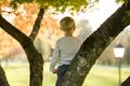 Young boy climbing an autumn tree
