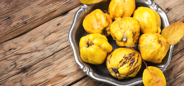 Fragrant autumn quince - Stock Photo - Images