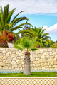 Palm trees in portuguese garden - PhotoDune Item for Sale