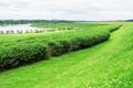 Tea plantation and pond - PhotoDune Item for Sale
