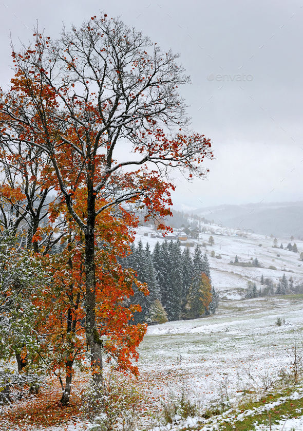 First autumn sudden snow - Stock Photo - Images