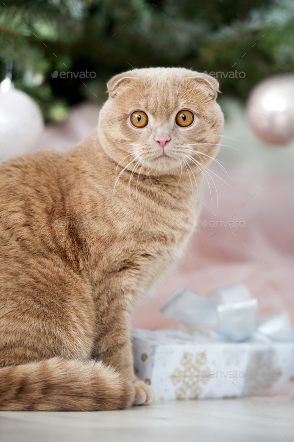 Cat with christmas tree and gift - Stock Photo - Images
