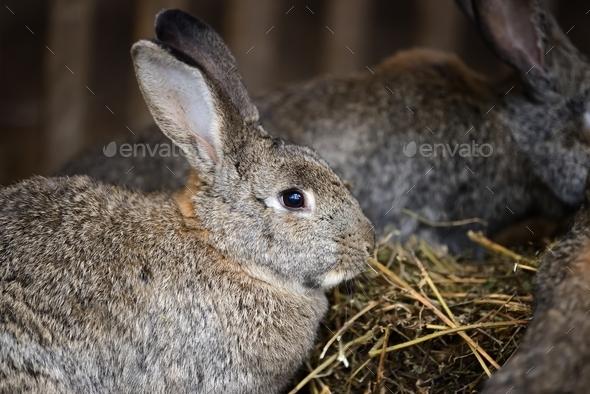 Close big rabbit - Stock Photo - Images