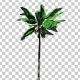 Banana Plant Tree - VideoHive Item for Sale