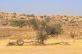 Auob River Valley in the Kalahari - PhotoDune Item for Sale