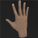 hand 3d model - 3DOcean Item for Sale