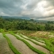 Beautiful Jatiluwih Rice Terraces in Bali, Indonesia