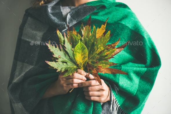 Woman in warm scarf holding Autumn leaves - Stock Photo - Images