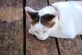 A cat sleeps on the wooden table - PhotoDune Item for Sale