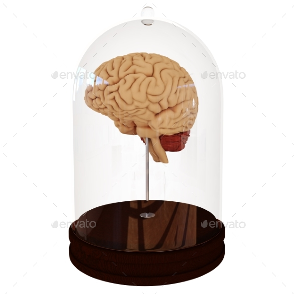 GraphicRiver Human Brain in a Jar 3D Render 21015370