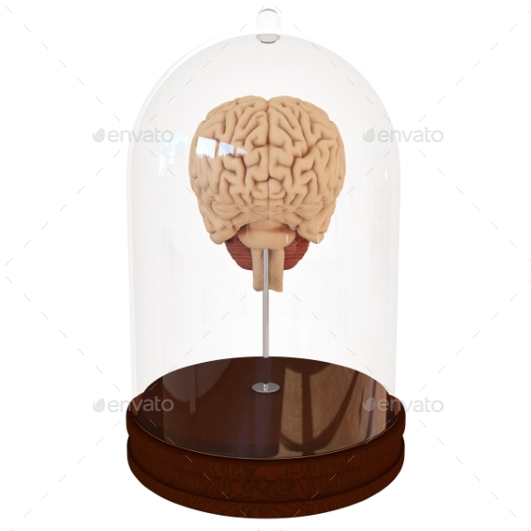 Human Brain in a Jar. 3D Render - Objects 3D Renders