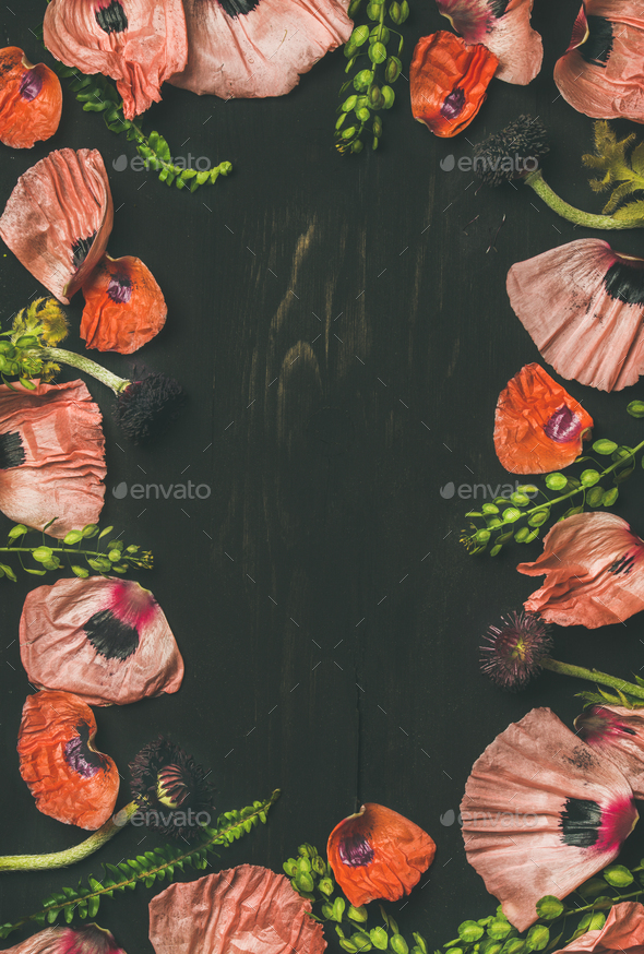 Pink and red flower petals, branches and leaves, copy space - Stock Photo - Images