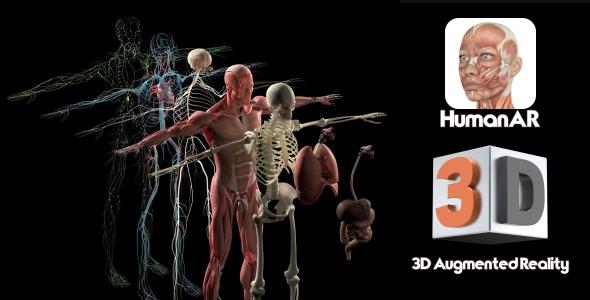 CodeCanyon HumanAr Anatomy 20983279